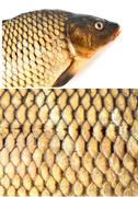 Carp dietary fish, squama Stock Photos