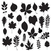 leaf collection - vector silhouette - stock illustration