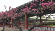 Stock Video Footage of Tourist people relax visit Temple of Heaven garden cherry tree flower Beijing