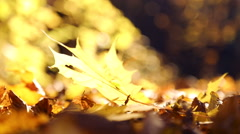 Autumn leaves wind blows.Autumn leaves in the park wind blows. Stock Footage