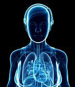 Female x-ray respiratory system artwork Stock Illustration