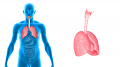 Lungs Stock Footage