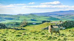 Beautiful yorkshire dales landscape stunning scenery england tourism uk green Stock Photos