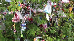 Lots of Pacifiers Hanging on Tree After Children Stopped Using Them Stock Footage