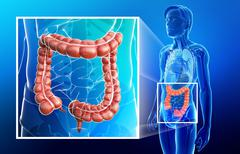 Large intestine anatomy Stock Illustration