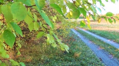 View of a rural road through tree leaves Stock Footage