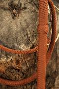 Bullwhip hanging on a tree trunk Kuvituskuvat
