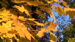 Close up view of Ugly leaves Stock Footage