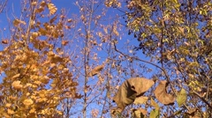 Autumn is a beautiful time of the year Stock Footage