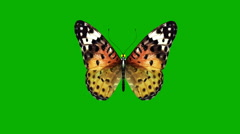 Butterfly on a green background Stock Footage