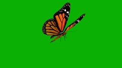 Green screen and the butterfly - stock footage