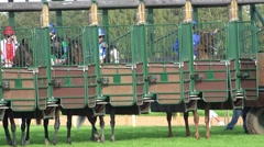 4k Closeup Horse Racing start boxes waiting for the race panning Stock Footage