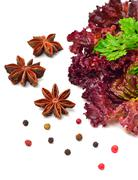 Red curly lettuce, parsley and anisetree Stock Photos