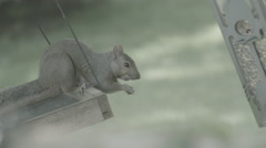 Squirrel on feeder - stock footage