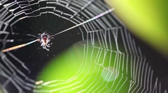 Spider web in forest Stock Footage