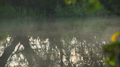 Morning fog hovering over the river, tree reflections in water, click for HD Stock Footage