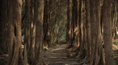 Beautiful alley in the unusual forest. Stock Footage