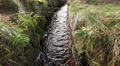 Small stream with red ferruginous water of low mountain range Harz HD Footage