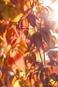 Autumn leaves in the sun Stock Photos
