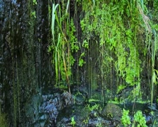 Stock Video Footage of First spring grass, melted snow water, nature awakening, click for HD