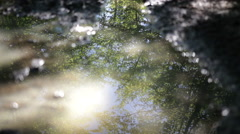 Forest reflected in water puddle on the ground Stock Footage