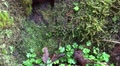 4k Autumn clover moss and scruffy mushrooms at tree trunk tilt 4k or 4k+ Resolution