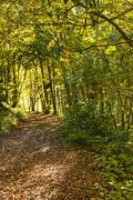 Forest with autumnal painted leaves in warm, sunny color Stock Photos