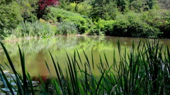Lake in the Forest Nature Background Stock Footage