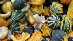 Gourds in a grouping Stock Footage