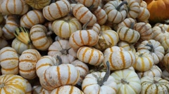 White Gourds Stock Footage