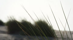 Dunes and grass. Stock Footage