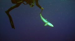 Shark, tonic immobility Stock Footage