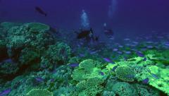 Scuba divers at coral reef Stock Footage