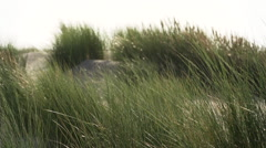 Dunes and grass at the beach. Stock Footage