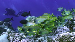 Shoal of colorful tropic fish swimming over coral reef, red sea reef Stock Footage