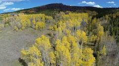 Autumn Fall Golden Aspen Trees Aerial 01 Stock Footage