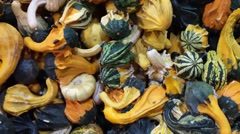 Gourds Pan Right Stock Footage