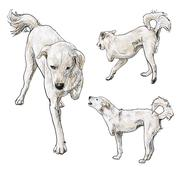 handicapped dog - stock illustration