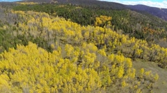 Autumn Fall Golden Aspen Trees Aerial 03 Stock Footage