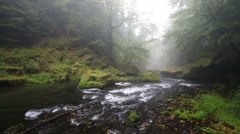 River Kamenice in foggy autumn day, Bohemian Switzerland, Czech Republic Stock Footage