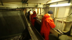 Working on a fishing vessel treated fish Stock Footage