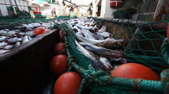 Workers being removed from the network fresh fish on the boat Stock Footage