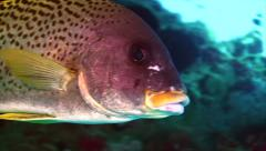 Tropical fish coral reef close Stock Footage