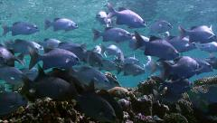 Big school of tropical fish Stock Footage