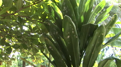 French Polynesia Tahiti Jungle and Hut Stock Footage