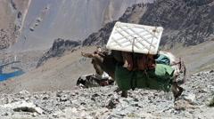Donkeys Pamir, Tazhikistan 1280x720 Stock Footage