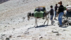 Donkeys descend from the pass. 1280x720 Stock Footage