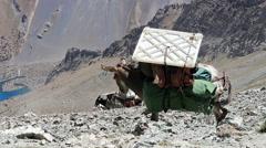 Donkeys Pamir, Tazhikistan Stock Footage