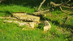 Wreckage of wood on the ground in an oak forest Stock Footage