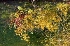 Yellow leaves fall colors reflection wenatchee river valley near stevens pass Stock Photos